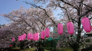桜祭りおおはら