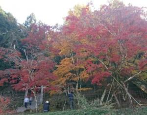 カードック弘成 秋散策